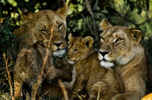 - little family - by PiTurianer