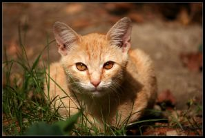 Cat by stefano283