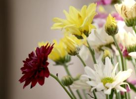 Flowers by sharan
