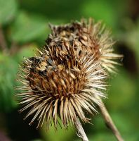 prickly pair by awjay