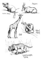 Zoo Sketches 04 by Popgrafix