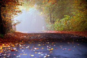 Fall 2014 by Justine1985