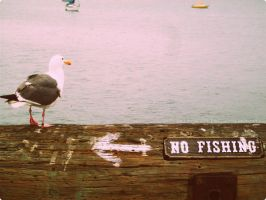 No Fishing by SCiganovich