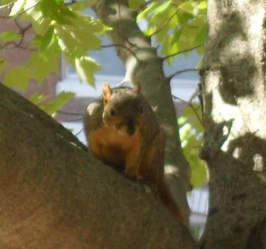 Random Squirrel by Miss-Merlina
