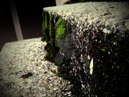Moss on Stair by dvdhrns