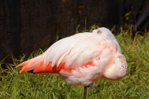 Flamingos can be kind of creepy by FeralWhippet