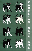 Karelian bear dog puppy ADOPTS TAKEN by Kultapossu