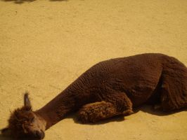 Colchester Zoo photos 20 by pan77155