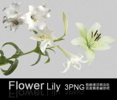 LILY 3PNG by jenny-F