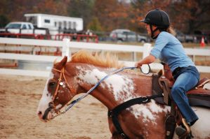 To Be a Team by guardianhorse