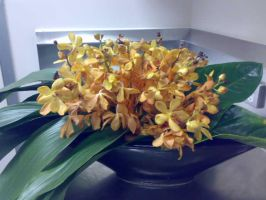 Orchids in a basket by G0ggles