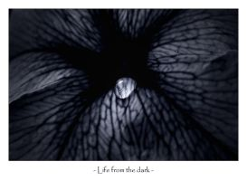 Life from the dark by frescendine