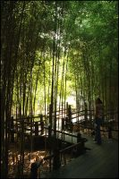 Bamboo Walkway by kineticdesign