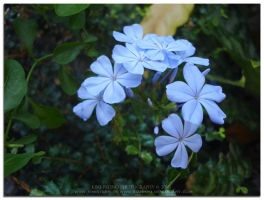 Forget Me Never... by kimistarrphotography