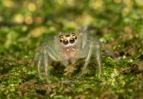 Spider by travellerplanet