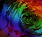 Psychedelic Rose by Hunter-Arkaman