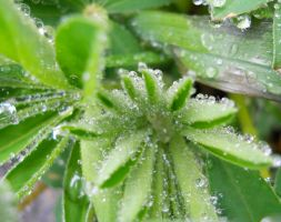 Wet Fuzzy Plant by Readmeabook21