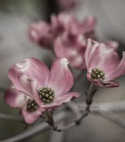 In the Pink by kayaksailor