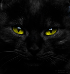 black cat IV by Bromelia94