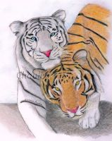Tigers by Chauler