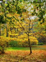 Colours of autumn I by starykocur