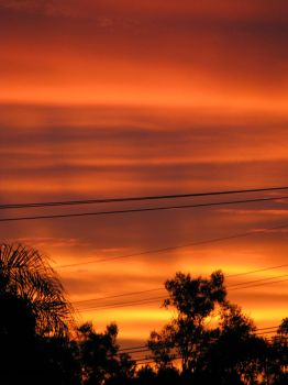 Suburban Sunset in Full Bloom8 by PinothyJ
