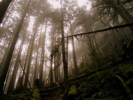 Up through the Fog by Westcoastspirits