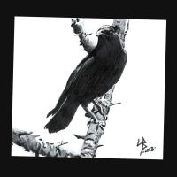 Crow by LeelaB