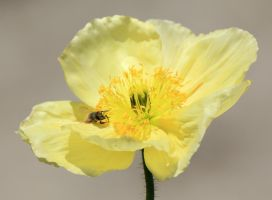 Bee and Poppy by meeks105