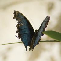 Butterfly 002 by akio-stock