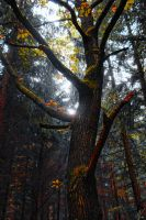 Fall colors life by EpisOd