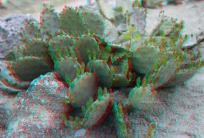 Cactus anaglyph by mrkane27