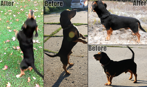 Buddy Before and After by PittMixx