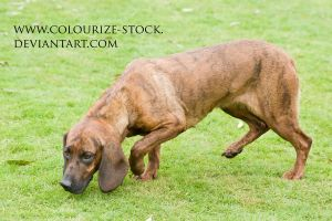 Dog 1 by Colourize-Stock