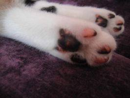 Kitteh paws by My-Life-In-Pictures