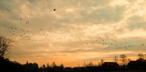 birds on the sky by florina23