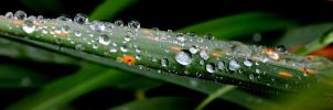 Water drops on weed by Xlashy