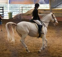 STOCK - 2014 Andalusian Nationals-248 by fillyrox