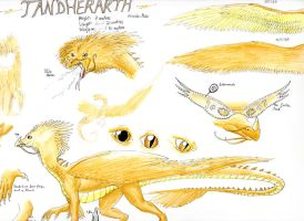 Tandherarth traditional reference sheet by SilverWolfi