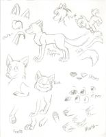 Canine Anatomy by catz1313
