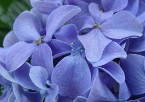 The Blue Bunch of Flowers by Planetfroggy