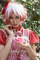 Peppermint Camellia by DollyPrincess