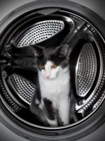 Cat wash by RaynePhotography