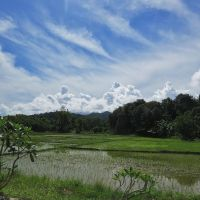 Rice Paddies and Blue Skies by ShipperTrish