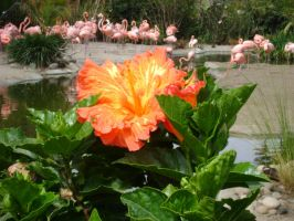 The Flower And The Flamingos by marigrace