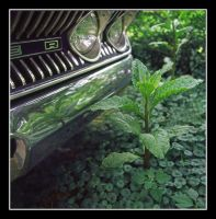 Long parked car. img269, with story by harrietsfriend
