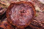 Petrified Log Cross-Section by Caloxort