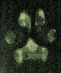 paw print by volpe-artica