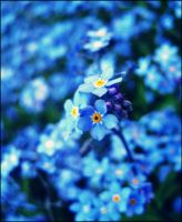 Blue flowers. by lettherebelove01