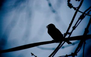 Sparrow on a Wire by DeviousDuo